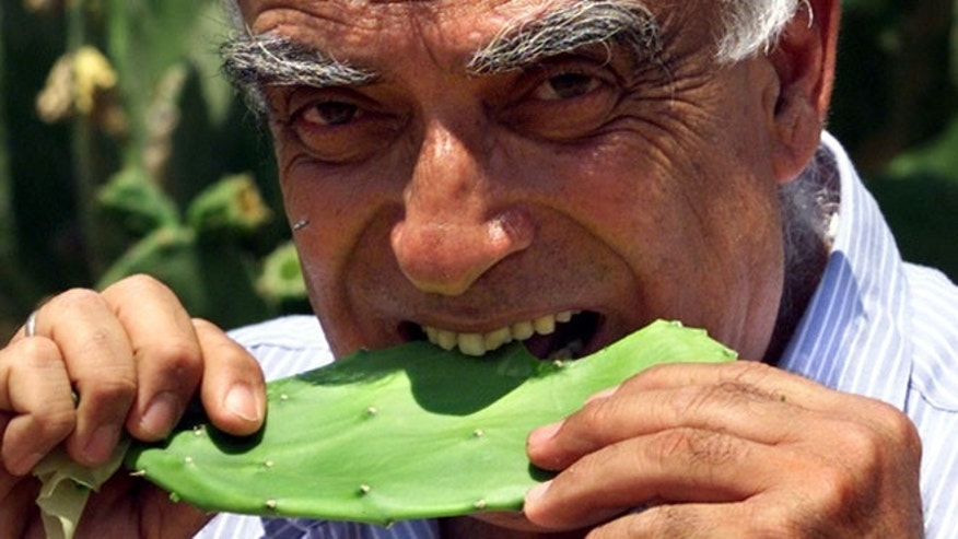Professor Yosef Mizrahi bites into a Mexican Nopalitos cactus leaf in a desert agriculture greenhouse of the Ben-Gurion University of the Negev in Israel. (REUTERS/David Silverman)