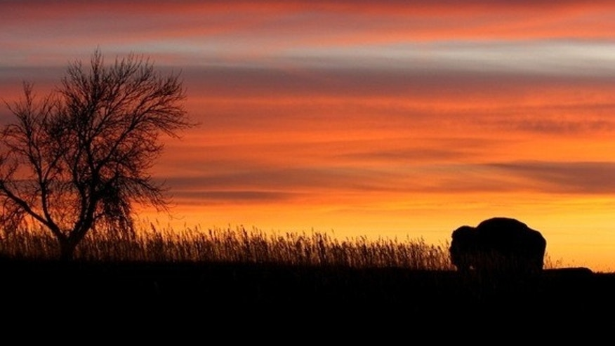 A single bison silhouetted against the sunset in North Dakota's Theodore Roosevelt National Park.