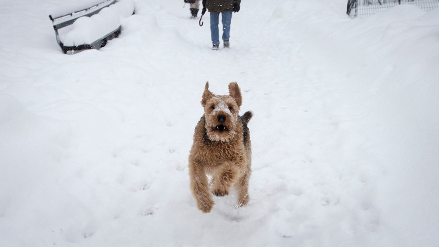 A dog runs along a path in New York City's Central Park as it snows February 13, 2014. (REUTERS/Carlo Allegri)