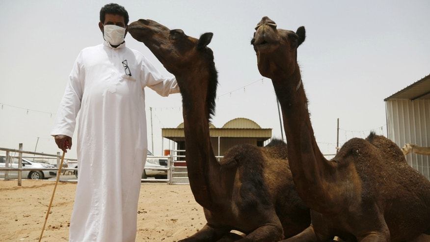 A man wearing a mask poses with camels at a camel market in the village of al-Thamama near Riyadh. Saudi Arabia said people handling camels should wear masks and gloves to prevent spreading Middle East Respiratory Syndrome (MERS).