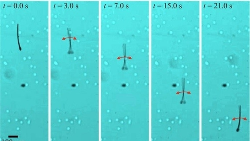 Sexy swimmers: These tiny swimming bots mimic the movement of sperm cells.