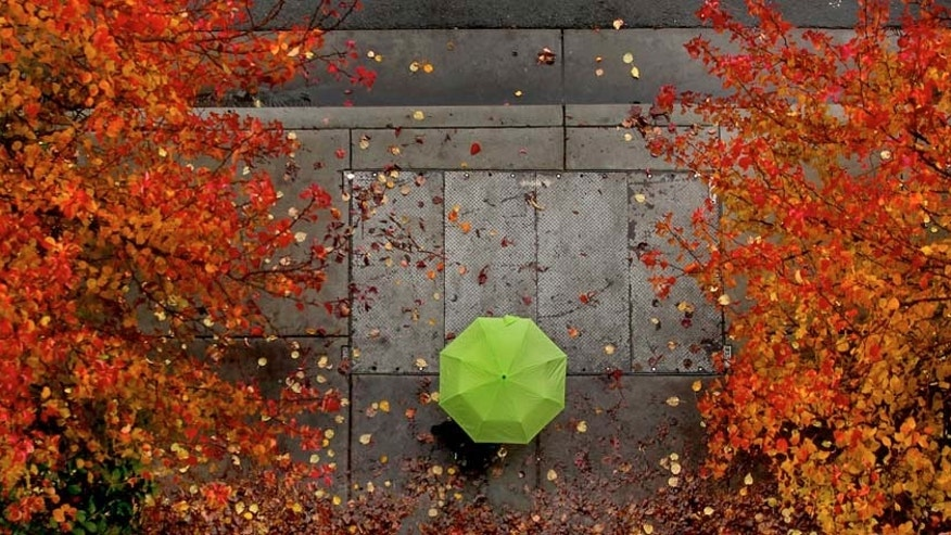 Fall colors mingle with the rainy weather along First Street in Santa Rosa, Calif., Wednesday Dec. 8, 2010. (AP Photo/The Press Democrat, Kent Porter)