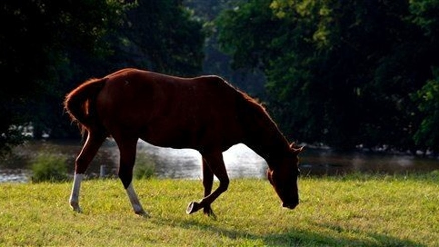 File photo of a horse near Vicksburg, Miss., Friday, May 20, 2011.