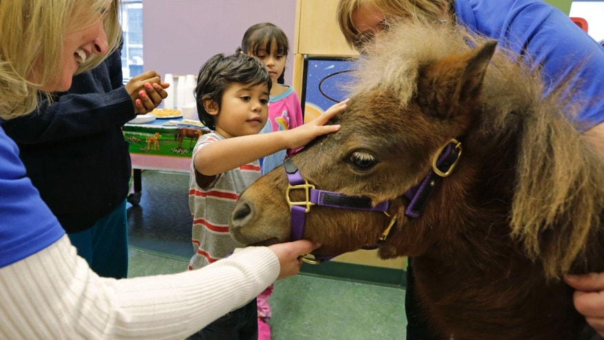 "In this Nov. 13, 2014 photo, patients Nathaniel Lopez, left, and Araceli Morales pet Lunar one of two miniature horses from ""Mane in Heaven"" that made a visit to the pediatric unit at Rush University Medical Center in Chicago. (AP Photo/M. Spencer Green)"