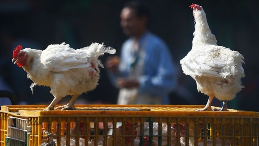 A man walks past live chickens on the outskirts of Cairo, December 4, 2014.