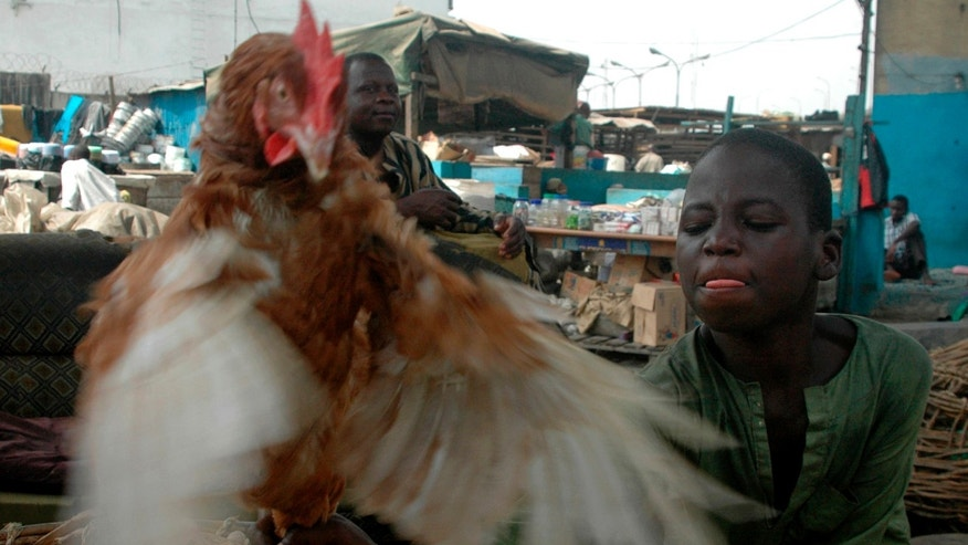 Jan. 30, 2007: JA boy catches a chicken at a local bird market in the commercial capital Lagos, Nigeria.
