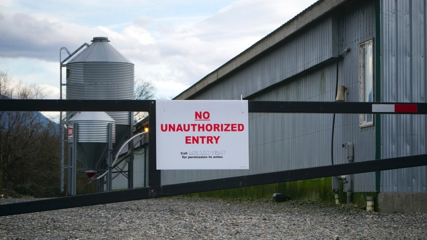 Dec. 8, 2014: A view of a poultry farm under quarantine due to bird flu, or avian influenza, in Chilliwack, British Columbia.