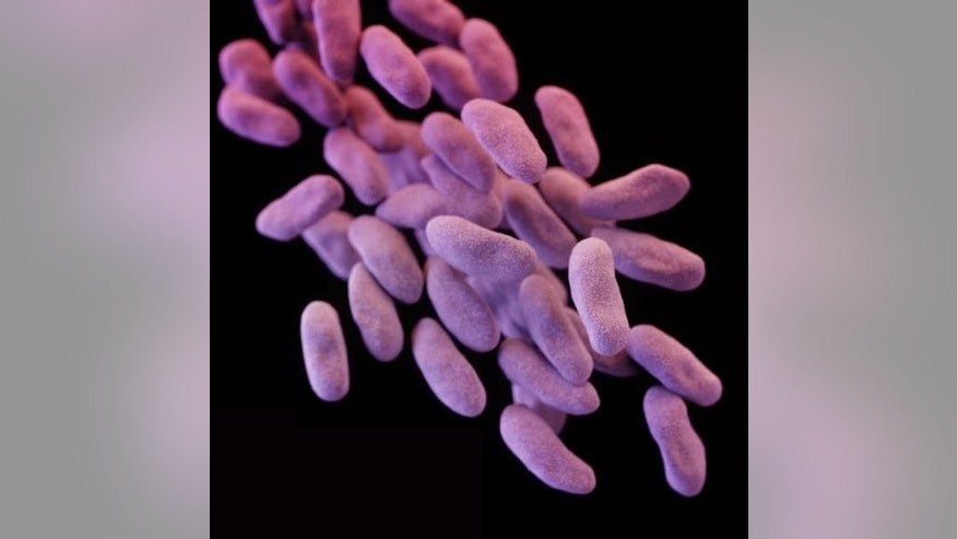 Carbapenem-resistant Enterobacteriaceae (CRE) bacteria is pictured in this medical illustration provided by the Centre of Disease Control and Prevention (CDC).