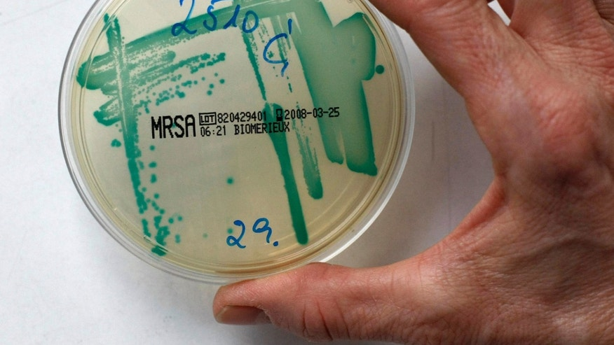 MRSA (Methicillin resistant Staphylococcus Aureus) bacteria strain is seen in a petri dish containing a special jelly for bacterial culture in a microbiological laboratory in Berlin March 1, 2008. REUTERS/Fabrizio Bensch (GERMANY)