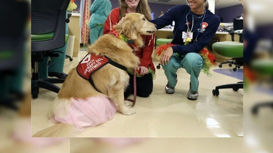 Registered nurse Caitlin Gruberg, right, and dog handler Katelynn Torres, left, pet Nutmeg, a therapy dog, at Joe DiMaggio Children's Hospital in Hollywood, Fla. (AP Photo/Alan Diaz)