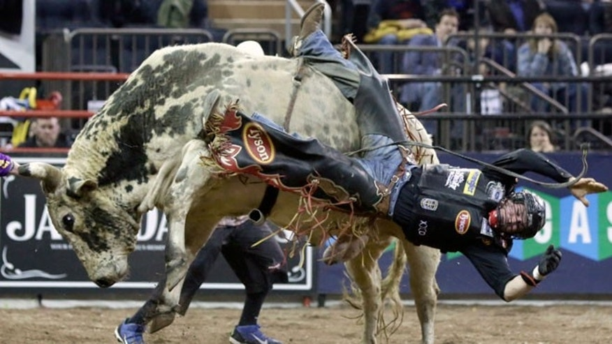 In this Jan. 17, 2015, file photo, Chase Outlaw, of Hamburg, Ariz., dismounts Sun Dome during the Professional Bull Riders Buck Off, in New York's Madison Square Garden. Serious injuries are occupational hazards for bull riders, but doctors, riders and researchers say the most pervasive injuries are concussions. The Professional Bull Riders' circuit's lead medical staffer says he hasn't seen a drop in the number of concussions despite the widespread use of helmets.
