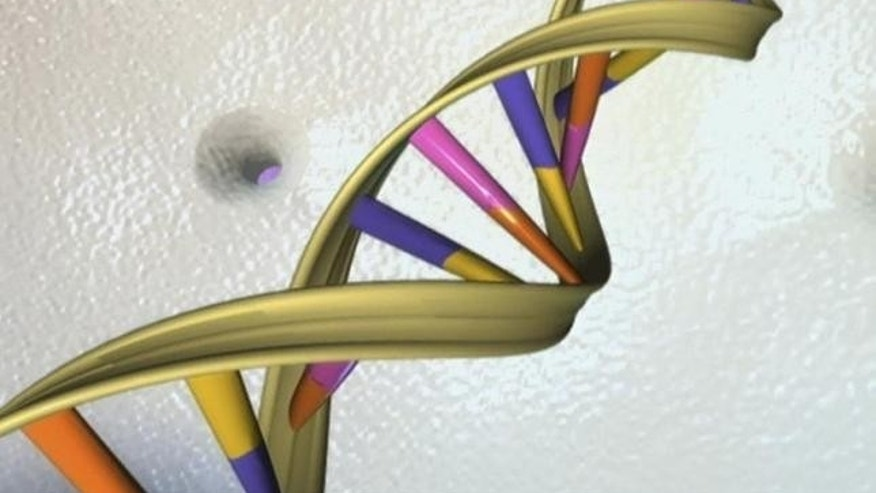 May 5, 2012: A DNA double helix is seen in an undated artist's illustration released by the National Human Genome Research Institute to Reuters.