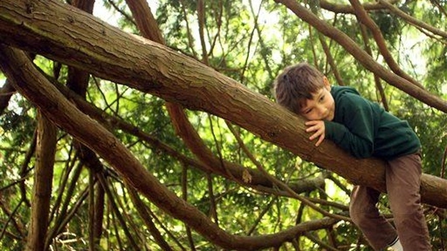 Tree climbing changes your working memory, a study finds.