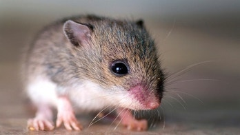 False memories can be implanted in mice and presumably humans.