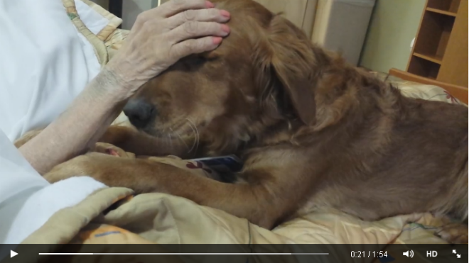 Video of therapy dog caring for hospice patient goes viral