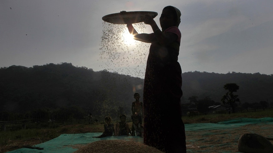 in this Tuesday, May 29, 2012 photo, an Indian woman dries paddy after harvesting at Burha Mayong village, near Gauhati, India. India plans to export up to 7 million tons of rice this year and a similar amount in the next fiscal year, according to government figures. (AP Photo/Anupam Nath)