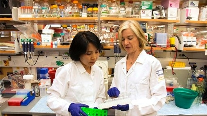 In this photo provided by UC Berkeley Public Affairs, taken June 20, 2014 Jennifer Doudna, right, and her lab manager, Kai Hong, work in her laboratory in Berkeley, Calif. (Cailey Cotner/UC Berkeley via AP)
