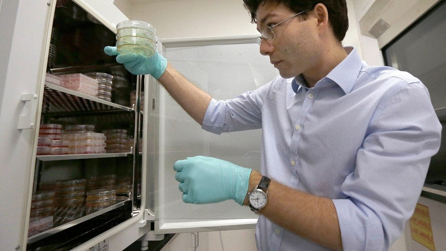 Dr. Sergiu Pasca, a neuroscientist, holds samples of cortical spheroids while posing for photos in his lab at Stanford University in Palo Alto, Calif., on Friday, Oct. 2, 2015. (AP Photo/Jeff Chiu)