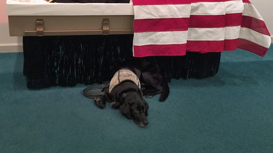 In this Saturday, Aug. 22, 2015 photo, Honor lies by the casket of Wade Baker at the Wells Funeral Home in Waynesville, N.C. When he saw his master lying in the flag-draped casket, the Labrador pushed through the clutch of weeping family members, reared up, placed his paws on the edge and tried to climb in. Unable to comfort Baker, he curled up underneath. (Susannah Smith via AP)