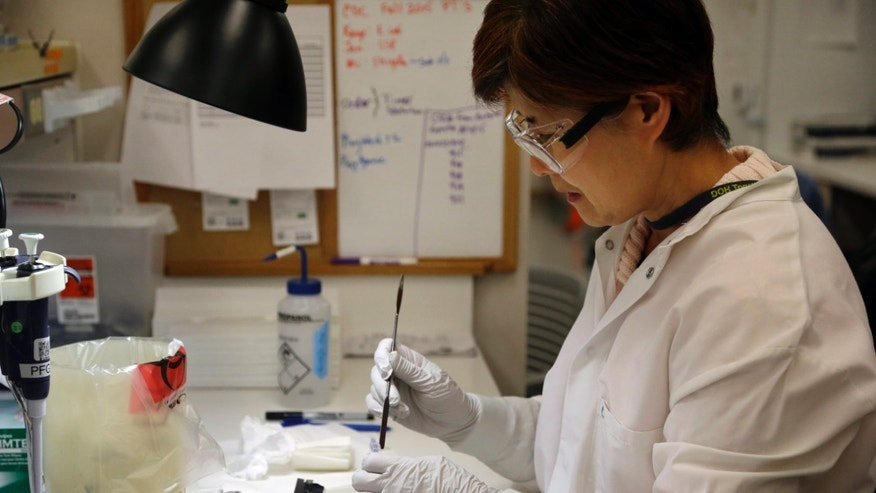 Microbiologist Mi Kang works to identify a strain of E. coli from a specimen in a lab at the Washington State Dept. of Health Tuesday, Nov. 3, 2015, in Shoreline, Wash. (AP Photo/Elaine Thompson)