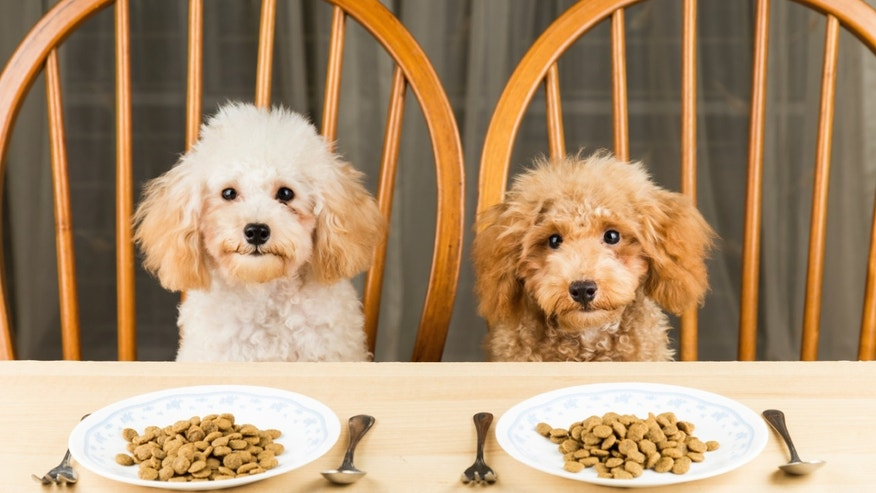 bored_poodles_istock