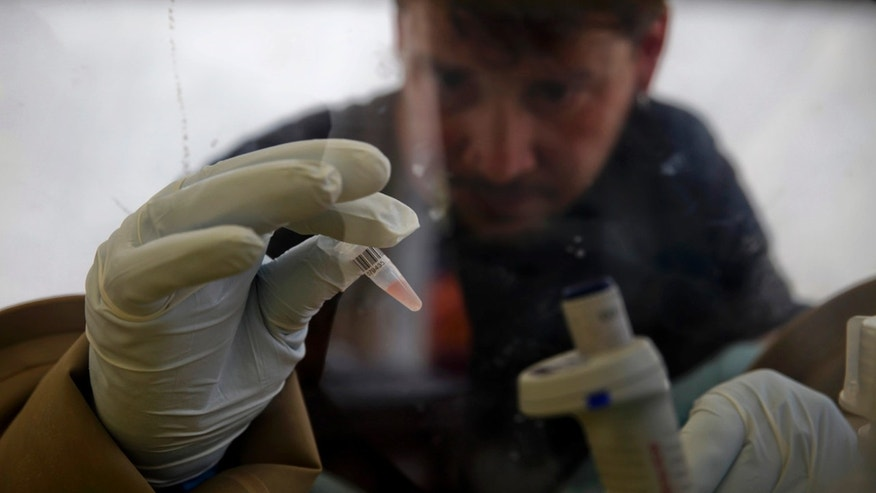 A scientist separates blood cells from plasma cells to isolate any Ebola RNA in order to test for the virus at the European Mobile Laboratory in Gueckedou April 3, 2014. (REUTERS/Misha Hussain)