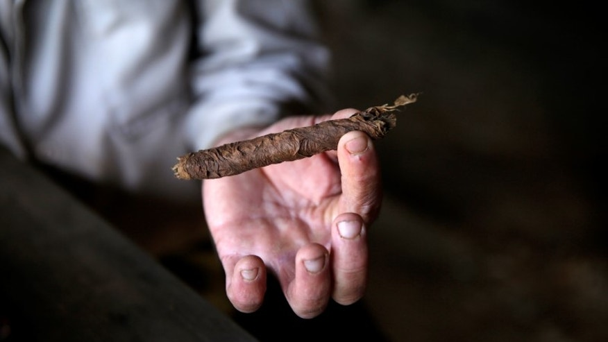 A farmer shows a cigar after rolling it at a plantation in valley of Vinales, in the western Cuban province of Pinar del Rio