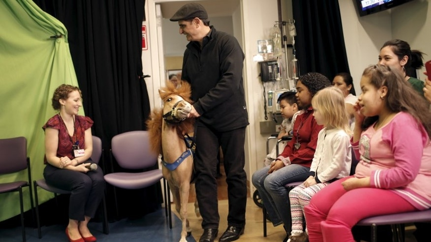 Handler Jorge Garcia-Bengochea walks with Honor, a miniature therapy horse from Gentle Carousel Miniature Therapy Horses, as they visit with patients at the Kravis Children's Hospital at Mount Sinai in the Manhattan borough of New York