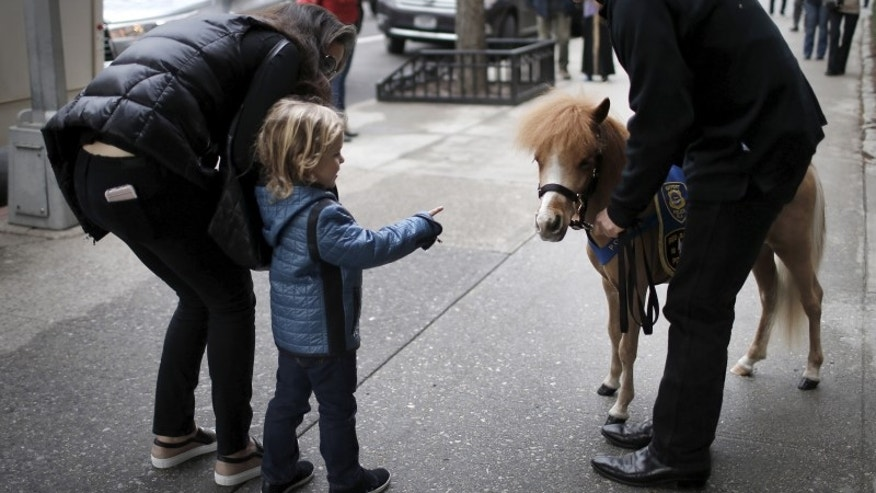 Handler Jorge Garcia-Bengochea holds Honor, a miniature therapy horse from Gentle Carousel Miniature Therapy Horses, as they are greeted by a child outside Kravis Children's Hospital at Mount Sinai in the Manhattan borough of New York