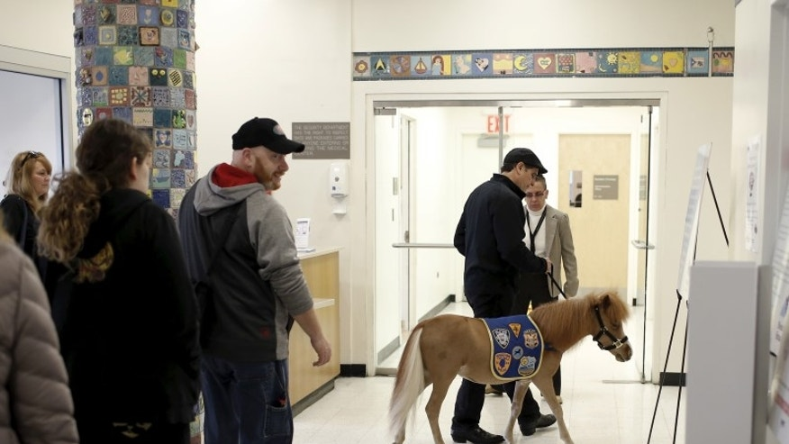 Handler Jorge Garcia-Bengochea walks Honor, a miniature therapy horse from Gentle Carousel Miniature Therapy Horses, through the hallway during a visit with patients at the Kravis Children's Hospital at Mount Sinai in the Manhattan borough of New York
