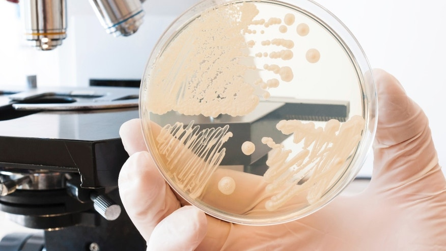 Mysterious outbreak & # x3a; 5 things to know about Elizabethkingia
