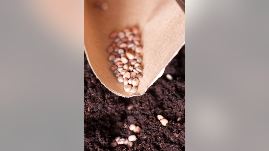 Students eating seeds to cause hallucinations, Massachusetts school officials warn