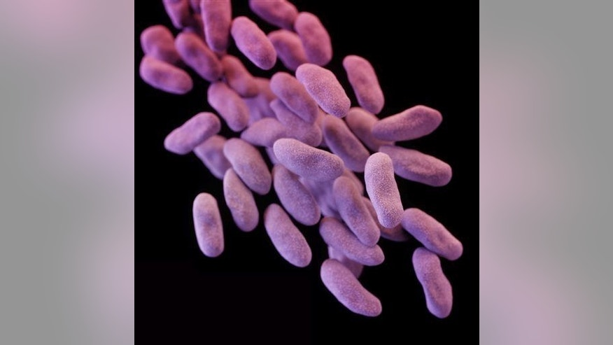 This illustration released by the CDC depicts a group of carbapenem-resistant Enterobacteriaceae bacteria.