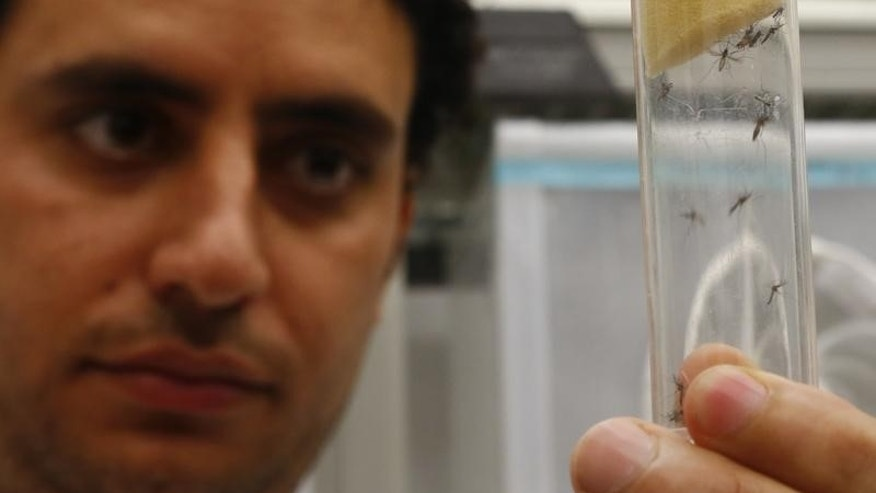 A scientist displays Aedes aegypti mosquitoes inside the IAEA laboratory in Seibersdorf