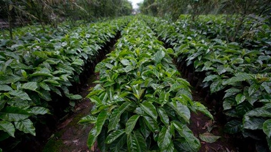 Sheppard says she used Roundup on her coffee farm for eight years.