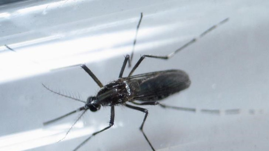 File photo shows an Aedes aegypti mosquito inside a test tube as part of a research on preventing the spread of the Zika virus and other mosquito-borne diseases at a control and prevention center in Guadalupe, neighbouring Monterrey