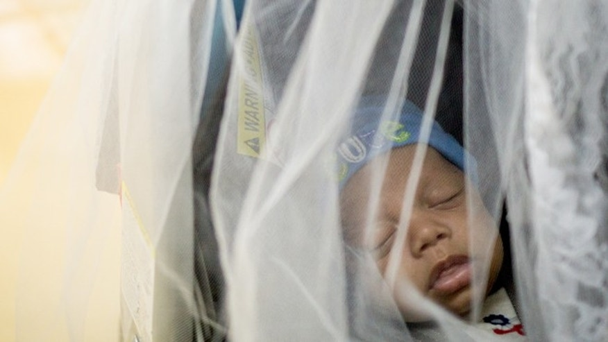 LOIZA, PUERTO RICO - AUGUST  30: Misael Carrasquillo, 2 months old, sleeps in a mosquito net covered baby stroller next to his identical twin brother Ismael during a visit for regular vaccinations at the Concilio de Salud Integral in Loiza, a primary care health clinic,  on August 30, 2016 in Loiza, Puerto Rico. The Centres for Disease Control and Prevention has estimated that 25% of the Puerto Rico's population could have the Zika Virus by the end of mosquito season, and that up to 50 pregnant women each day are infected on the island.  A recent study projected as many as 270 babies could be born with the debilitating birth defect microcephaly, between now and mid-2017. In a normal year, doctors expect to see just 16 such cases.   (Photo by Angel Valentin/Getty Images)