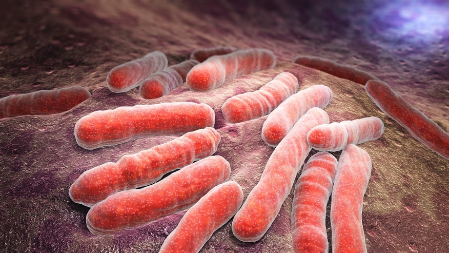A graphic of mycobacterium tuberculosis, a pathogenic bacterial species in the family Mycobacteriaceae and the causative agent of most cases of tuberculosis.