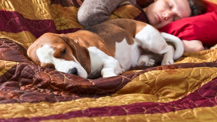 The sleeping woman and its dog in bedroom,focus on foreground