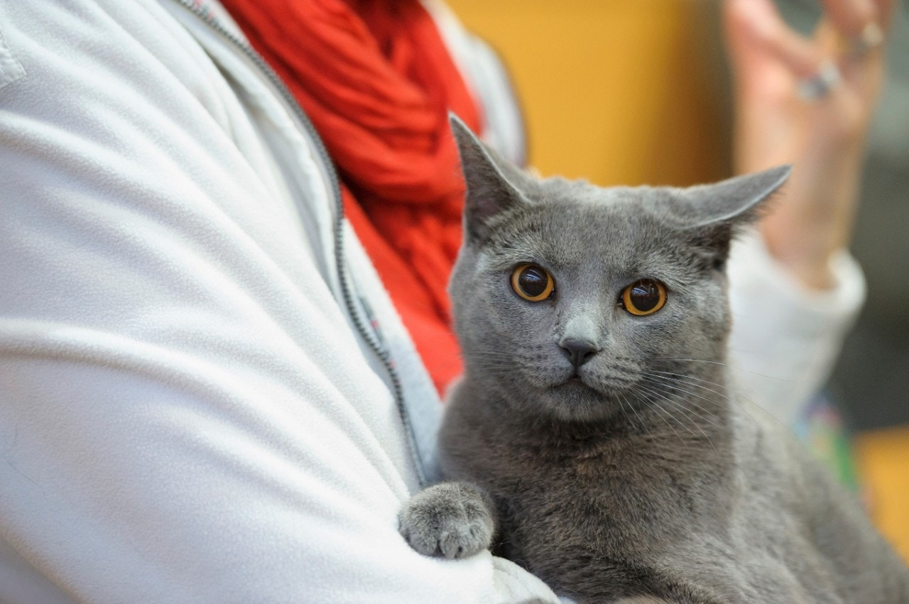 3 mistakes even good pet owners make