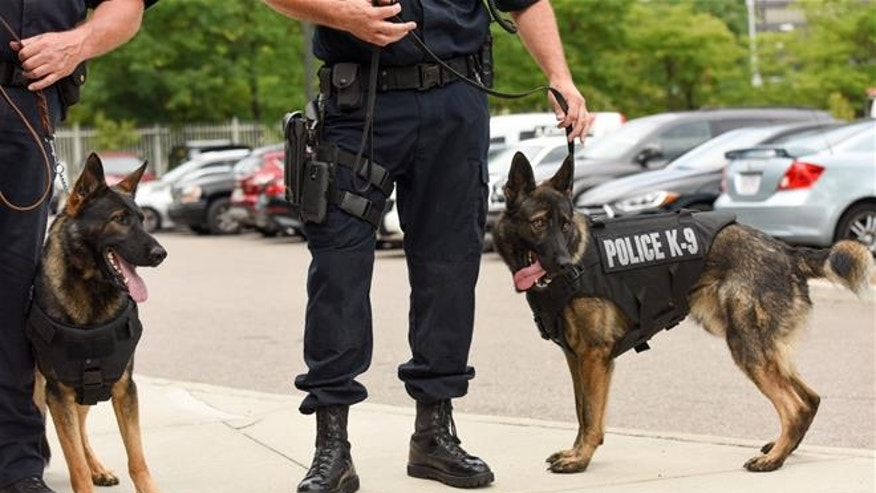 Police dogs are more vulnerable to fentanyl's dangers than their human colleagues.