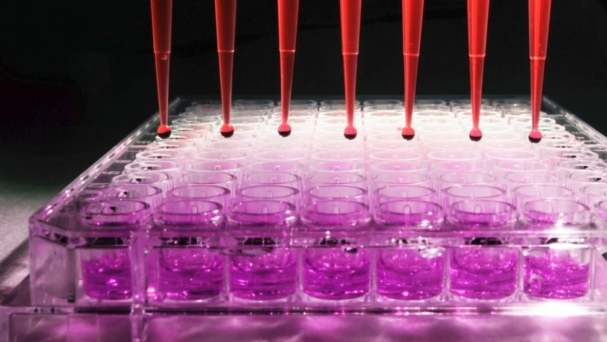 Pipette tips discharging diluted human blood into a 96 well tissue culture plate for an experiment at a research laboratory