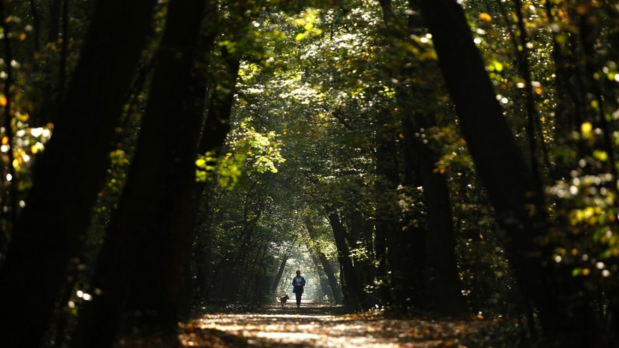 A woman jogs with her dog through a park during a sunny autumn day in central Sofia October 14, 2014.