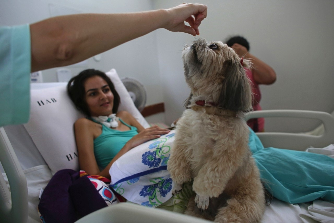 Dogs provide therapy in a Brazilian hospital