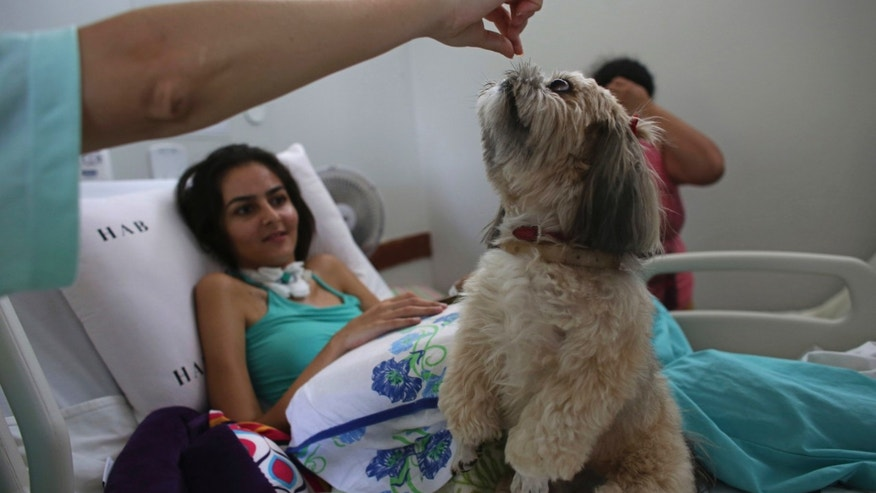 "In this Nov. 17, 2016 photo, 20-year-old patient Gleisiane Oliveira watches Shitzu dog named Mille be given a treat on her bed at the Support Hospital of Brasilia, Brazil. The animals are the ""stars of the project,"" according to Nayara Brea who coordinates a pet therapy program for patients with advanced cancer, those living with chronic diseases and recovering from trauma. (AP Photo/Eraldo Peres)"