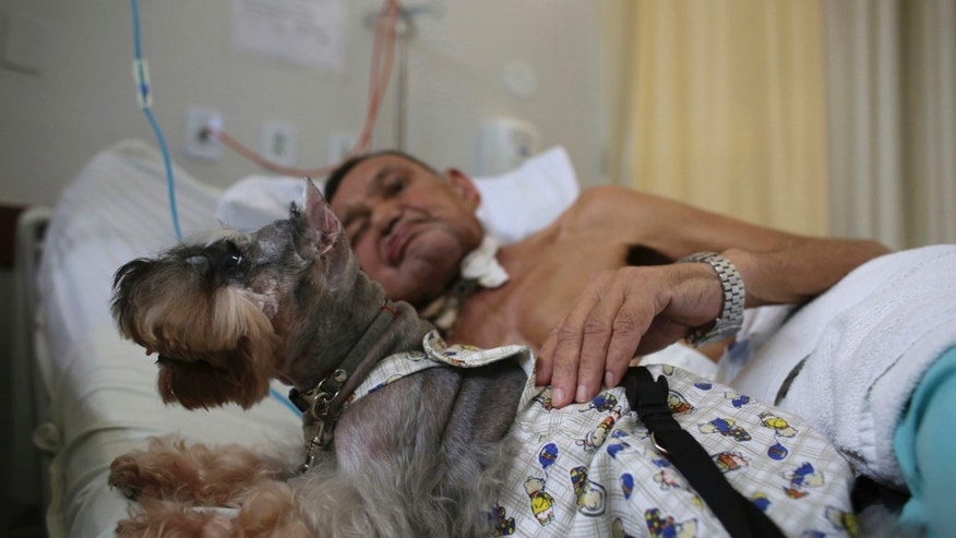 In this Nov. 17, 2016 photo, Nivaldo Lopes, a 60-year-old geriatric patient, pets a Schnauzer dog named Paola in his bed at the Support Hospital of Brasilia, Brazil. The hospital's pet therapy program was set up to help patients with advanced cancer and those living with chronic diseases or recovering from trauma. (AP Photo/Eraldo Peres)