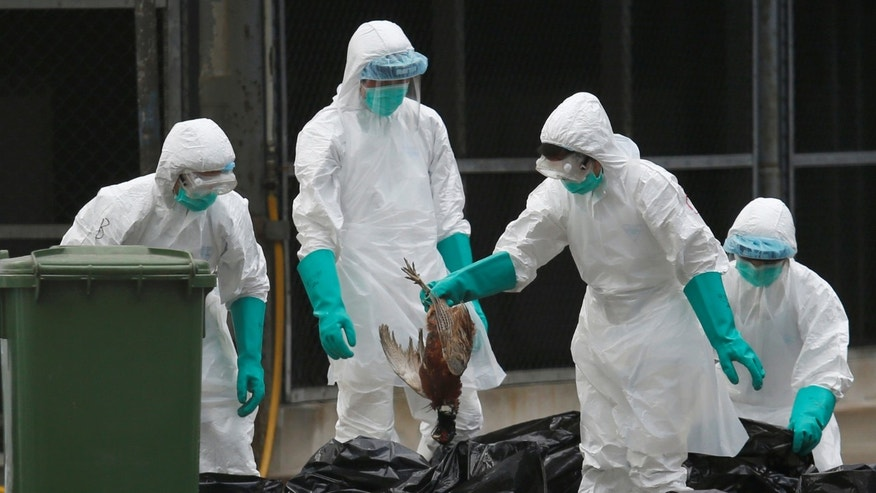 Health officers cull poultry at a wholesale market, as trade in live poultry suspended after a spot check at a local street market revealed the presence of H7N9 bird flu virus, in Hong Kong June 7, 2016.