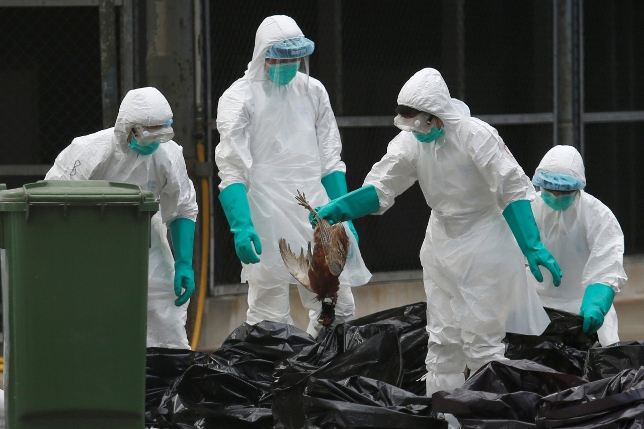 China confirms 1 more human death from H7N9 bird flu