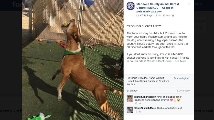 (Maricopa County Animal Care & Control/Facebook)