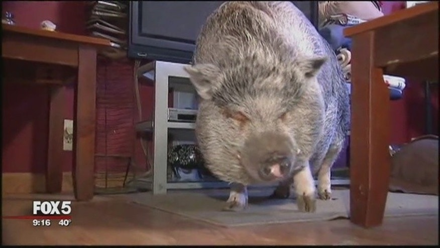 The health department said Wilbur must leave his family's home in Staten Island.